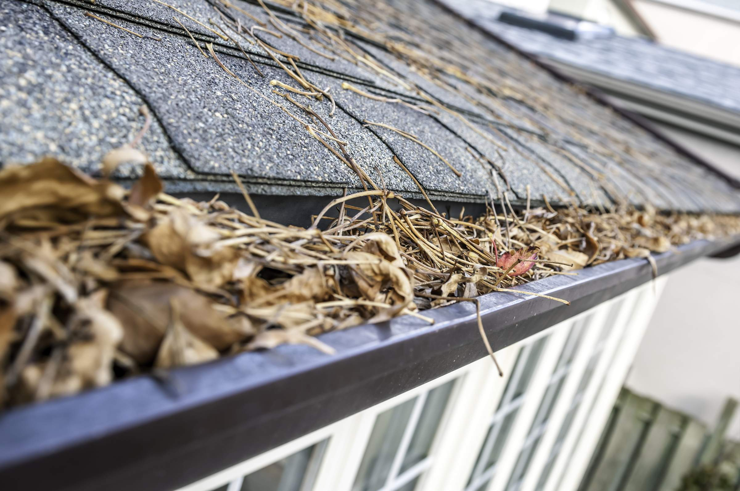 professional care for your wilmington nc gutters pro pressure washing